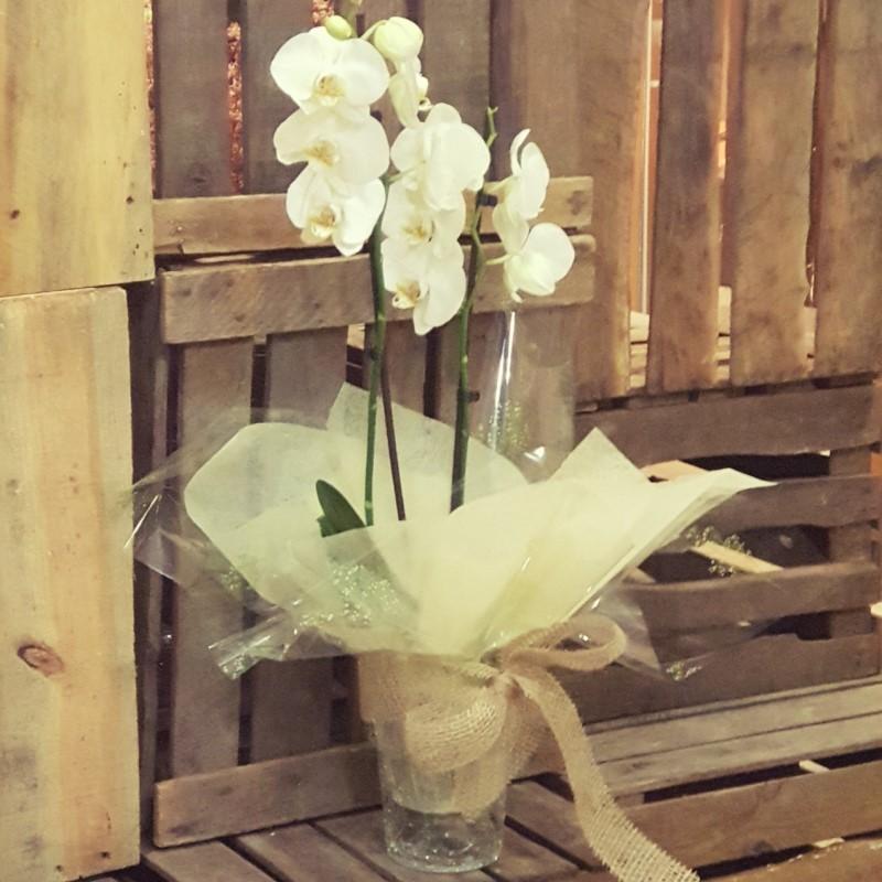 orquidea de 30e floristería Aladino Alcoy