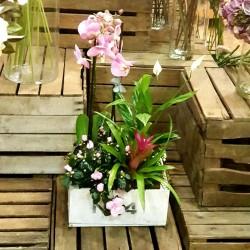 Centro caja con orquídea