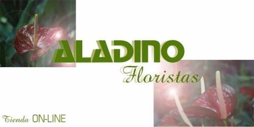 FLORISTERIA ALADINO